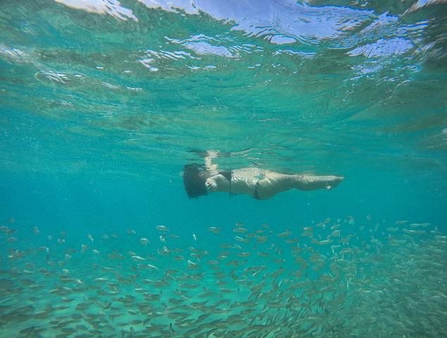 praia+sancho+noronha+peixes